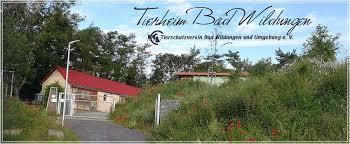 tierheim bad wildungen home