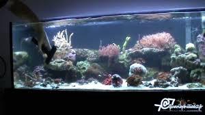 entretien nettoyage d un aquarium récifal marin ou eau de mer