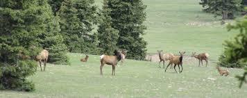 Elk Shed Hunting Utah by Janie And Steve Utah Trails Elk Surprise