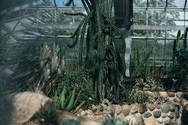 Lush Matthaei Botanical Gardens Conservatory Engagement Session