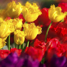 best types of bulbs to plant now for beautiful blooms