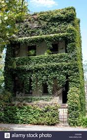 100 Sydney Terrace House Terrace House Covered In Green Foliage NSW Australia Stock