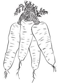 Click To See Printable Version Of Four Carrots Coloring Page