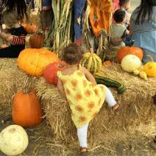Pumpkin Patch Pasadena Area by Pumpkin Festival Kidspace Children U0027s Museum