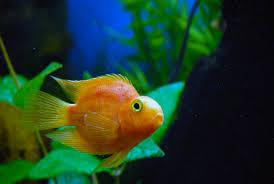 poisson eau douce aquarium tropical aux poissons exotiques plus de 30 ans déjà au service de l
