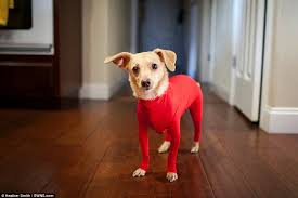 shed defender leotard for dogs stops them shedding their hair all