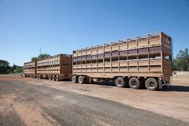 Australian Livestock And Rural Transporters Association Trucking The Worlds Best Photos Of 389 And Livestock Flickr Hive Mind About Metzger Agricultural Exemptions Instated For Regulations Pork Firms Worried Electronic Logging Device Could Hurt Henderson Jobs Otr Long Haul Truck Drivers West Land Cattle Hauler Jessica Lorees 2003 Pete 379 Livestockcattle Haulers Sale Llc Kenworth T800 With 4 Axle Tra Truck Spill Cleaned Up A Lot Help Krvn Radio Australian Livestock Rural Transporters Association