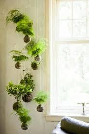 hängende zimmerpflanzen und balkonpflanzen umweltgerechtes