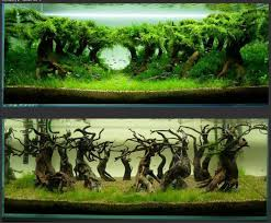 1000 ideas about Aquascape Aquarium on Pinterest