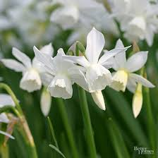 the bhg garden editors their favorite blooming bulbs