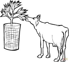 Coloriage Vache Qui Mange Des Feuilles Coloriages à Imprimer