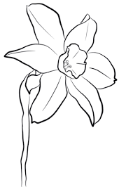 Click To See Printable Version Of Daffodil Coloring Page