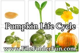 Life Cycle Of A Pumpkin Seed Worksheet by Pumpkin Preschool Printables