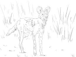 Wild Animals Coloring Pages Printable Kids Book And Wildlife Colouring Of Color