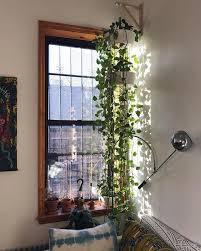 8 schöne hängende pflanzen perfekt für wohnungen thefab20s