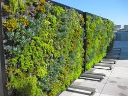 mur de separation exterieur separation vegetale exterieure atelier nature