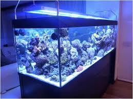 eclairage led pour aquarium eau de mer le pour éclairer un aquarium toute l actualité des les led