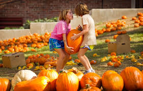 Pumpkin Patch Austin Texas 2015 by Pumpkins For A Good Cause U2013 Collective Vision Photoblog For The