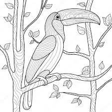 Toucan Coloring Page TelematikInstitutorg