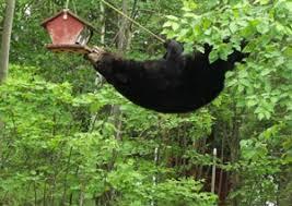 Protecting Bird Feeders From Bears