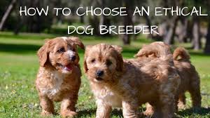 Backyard Breeders Pics On Outstanding Breeding Definition Vip ... Breeding Cception To Birth Three Creek Australian Spherds Latest News New Orleans Louisiana Spca 17 Best Aspca Images On Pinterest Animal Rescue Rights Breeders Backyard And Puppy Mills What Is The Difference Signs Of A Breeder Its Dog Or Nothing Image With Fabulous Puppies Trapped In Dirty Are So Happy To See Their Rescuers Rescuogsfrombreeders Breed Gallery Red Flags Warning When Dealing With A Article Why Adopt Sitas Sanctuary Rescue From Mill Being Sold In Pet Store Puppy Remy Griffon For Love Of Animals