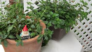 Gulf Coast Gardening Dress Up a Patio or Deck with Containers