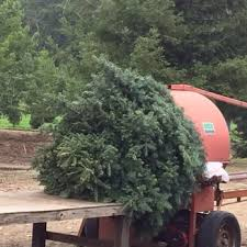 Santa Cruz Ca Christmas Tree Farms by Mckenzie Ranch Christmas Tree Farm 18 Photos U0026 16 Reviews