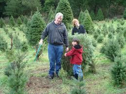 Santa Cruz County Christmas Tree Farms by Best U Cut Christmas Tree Farms In The Bay Area