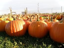 Hartsburg Pumpkin Festival 2015 Dates by 45 Best Autumn Landscape Images On Pinterest Pumpkin Patches