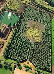 The Pineapple Garden Maze Oahu HI HaleHawaii Home