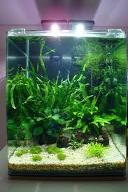the 25 best nano aquarium ideas on aqua aquarium
