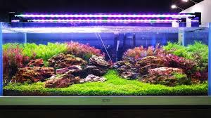 CIPS 2017 - LiuBo Aquarium (Aquascaping Ideas) - YouTube Home Accsories Astonishing Aquascape Designs With Aquarium Minimalist Aquascaping Archive Page 4 Reef Central Online Aquatic Eden Blog Any Aquascape Ideas For My New 55g 2reef Saltwater And A Moss Experiment Design Timelapse Youtube Gallery Tropical Fish And Appartment Marine Ideas Luxury 31 Upgraded 10g To A 20g Last Night Aquariums Best 25 On Pinterest Cuisine Top About Gallon Tank On Goldfish 160 Best Fish Tank Images Tanks Fishing