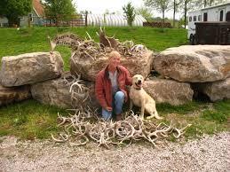 antler ridge shed dogs shed hunting using an antler dog