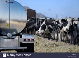 Milk Truck Stock Photos & Milk Truck Stock Images - Alamy He Was Just Covered In Milk And Blood Truck Wreck Leaves Milky Feb 19 Middlebury Vt Milk Accident Youtube 134 East2 South Connector Reopened After Tanker Crash Abc7com Tales From The Gorge 3052 I93 Ramp Shut Down Rolls Over Crash Sends Truck Driver To Hospital 2 Injured Accident Volving Wnem Tv 5 Hauling Damages Belmont County Home Farm Dairy Newport News Injures Two Virginia Police Driver Of Choked On Soda Plowed Into Hermitage The Culmination Insanity Pearlsprofundity