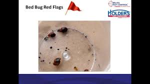 Signs Of Bed Bugs | Bed Bug Symptoms | Wil-Kil Pest Control Bugster Bugs Pest Control Wordpress Theme For Home Mice Rodent Nj Get Free Inspection By Licensed Layla Mattress Review Reasons To Buynot Buy 2019 Mortein Powergard Flea Crawling Insect Bomb 2 X 150g 1count Repeller 7 Steps A Healthy Lawn Pride Holly Springs Sameday Service Triangle Family Dollar Smartspins In Smart Coupons App Spartan Mosquito Eradicator Yards Pack Rottler Solutions Experts In St Louis