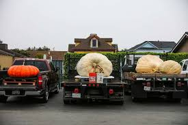 Best Pumpkin Patch Near Roseville Ca by 1st Woman In 19 Years Wins Half Moon Bay U0027s Pumpkin Weigh Off Sfgate