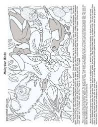 Malaysia Animal Coloring Page Malaysian Birds Print Size