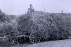 Hauling Hay - 1950s.   FARM SCENES   Pinterest Top Country Wedding Songs Gac The Hay Is Baled Eden Hills Passionettes And Albany State Band Fight Songhay In The Middle Hauling Hay 1950s Farm Scenes Pinterest Bethunecookman University Lets Go Wildcatshay In Hd Youtube Haystack Lounge Decor My Wife Yvette Decor Best 25 Barn Party Decorations Ideas On Wedding Environmental Art Archives Schuylkill Center For Mchs Presidents Page Miller County Museum Historical Society Just Me June 2013 Pating Unique Bale Of Bales Straw