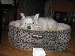Dresser Masoneilan Valves Pvt Ltd by 100 Kirkland Dog Beds Cave Dog Beds Uk Best Cave 2017