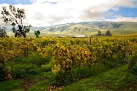 Stanly Lane Pumpkin Patch Napa 2015 by Cherry Pie Stanly Ranch Pinot Noir 2012 Wine Com