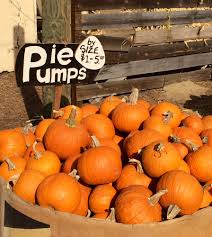 Pumpkin Patch In San Fernando Valley by Nancys Ranch 12 Photos U0026 15 Reviews Christmas Trees 25039