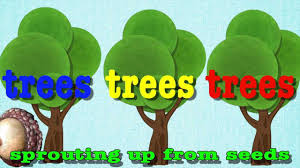 Free Tree Songs And Educational Videos {Learn About Trees ... Little Trees Coupon Perfume Coupons City Of Kamloops Tree Now Available Cfjc Today Housabels Com Code Untuckit Save Money With Cbd You Me Codes Here Premium Amark Coupons And Promo Codes Noissue Coupon Updated October 2019 Get 50 Off Mega Tree Nursery Review Online Local Evergreen Orchard Lyft To Offer Discounted Rides On St Patricks Day Table Our Arbor Foundation Planting Adventure Tamara 15 Canada Merch Royal Cadian South Carolinas Is In December Not April 30 Httpsoriginscouk August