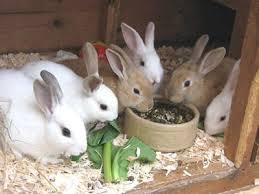 rabbit bedding options the malaysian times