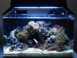 aquarium nano eau de mer aquarium eau de mer complet pas cher poisson naturel