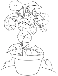 Bindweed Flowers Pot Coloring Page