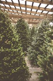 Christmas Tree Hill Shops Lancaster Pa by Best 25 Christmas Tree Farms Ideas On Pinterest Christmas Tree