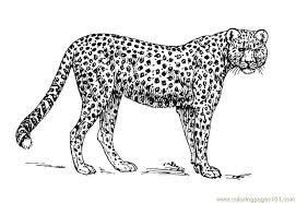 Coloring Pages Cheetah Mammals Free Printable