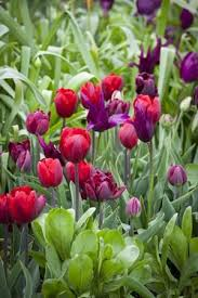117 best bulbs in the garden images on