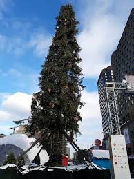 Christmas Tree Species Canada by Montreal U0027s Despised Christmas Tree Image And Authenticity