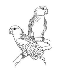 Clever Bird Animal Coloring Pages Adult Beautiful Parrot For Kids Vista